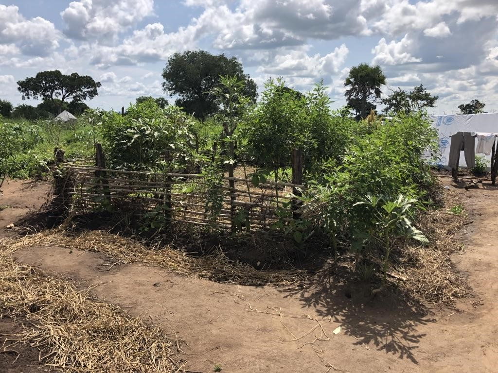 Water harvesting and diverse crop selection within the homestead Permagarden.  Palabek Refugee Settlement, Northern Uganda.  African Women Rising