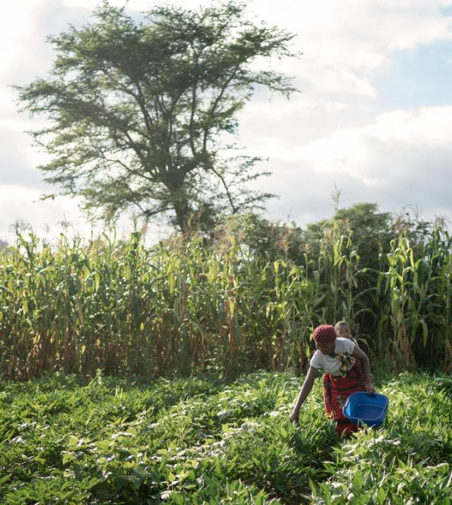 photo of woman farming